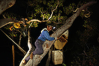 Hamsah and his brother Boni cut the honey from the giant bees' only comb. The precious nectar falls into a basket hanging below the branch. The basket is then lowered by ropes. Depending on the abundance of flowers and the time of the harvest, twenty or so combs can yield a harvest of 100, even 140 kg of honey per lalau.///Hamsah et son frère Boni coupent le miel du rayon unique des abeilles géantes. Le précieux nectar tombe dans un panier installé sous la branche. Le panier est ensuite descendu à l'aide de cordes. Selon l'abondance des fleurs et le moment de la récolte, une vingtaine de rayons permet de récolter jusqu'à 100, voire 140kg de miel, par lalau.