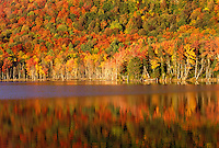 autumn, reflection, lake, Eden, VT, Vermont, Colorful fall foliage reflecting in the calm water of Long Pond (Belvedere Pond) in the autumn.