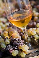 Europe/France/Midi-Pyrénées/81/Tarn/ Cahuzac-sur-Vère:   Vin d'Autan  sur les claies ou les raisins de cépage Ondenc blanc sont mis à sécher par  passerillage- Robert et Bernard Plageoles viticulteurs au Domaine de Tres Cantous