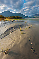 Animal tracks along the Turnagain Arm tidal mud flats and marsh grasses, Chugach mountains, Chugach National Forest, southcentral, Alaska.