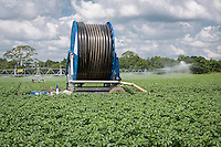 Irigating main crop potatoes with Briggs reel & boom - Lincolnshire, June