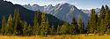 Alpine pine forest panorama,  Nordtirol, Tirol, Austrian Alps, Austria. Digitally Stitched Image.