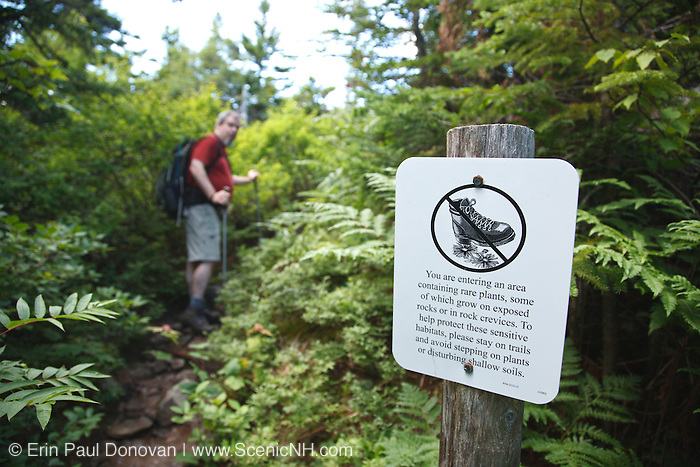 Caribou - Speckled Mountain Wilderness - Fragile Environment sign along Mud Brook Trail near the summit of Caribou Mountain in the White Mountain National Forest of Maine.