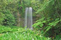 Milla Milla waterfall, Atherton Tablelands, Queensland, Australia