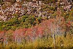 Fall foliage on the Great Meadow, Acadia National Park, ME, USA