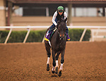 DEL MAR, CA - OCTOBER 29: Breeders' Cup Distaff contender Elate completes her workout at Del Mar Thoroughbred Club on October 29, 2017 in Del Mar, California. (Photo by Alex Evers/Eclipse Sportswire/Breeders Cup)