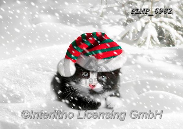 Marek, CHRISTMAS ANIMALS, WEIHNACHTEN TIERE, NAVIDAD ANIMALES, photos+++++,PLMP6982,#xa# ,kittens,cats