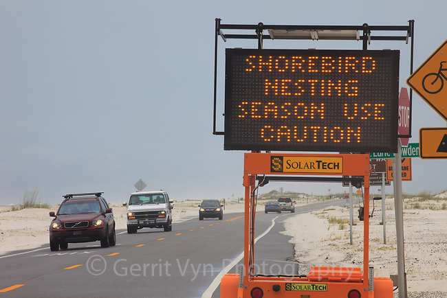 A sign along the road alerting motorists to a Least Tern and Black Skimmer nesting colony adjacent to the road. Gulf Islands National Seashore, Florida. June.
