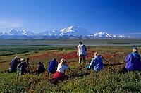 Photographers, red bearberry, and mount Denali, Denali National Park, Alaska