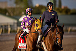 HALLANDALE FL - FEBRUARY 27: Fellowship #1, ridden by Jose Lezcano in the post parade for the Xpressbet.com Fountain of Youth Stakes at Gulfstream Park on February 27, 2016 in Hallandale, Florida.(Photo by Alex Evers/Eclipse Sportswire/Getty Images)