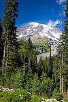 Mt. Rainier seen with little snow in summer.  Scene is from below Paradise Visitor Center near famous Paradise Lodge in Mount Rainier National Park.  Other landmarks on the mountain are Indian Henry's Hunting Ground and Nisqually Glacier.  Longmire entrance, Mount Rainier National Park.  Mid summer.