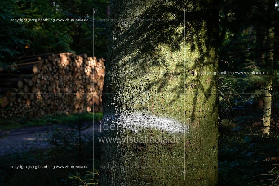 GERMANY, lower saxonia, Forest / DEUTSCHLAND, Niedersachsen, Fichtenwald, Holzernte nach Borkenkäferbefall und Sturmschäden, Holzpolter, Baum Markierung