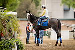 ARCADIA, CA - OCTOBER 29: Arrogate with exercise rider Dana Barnes aboard comes off the track after completing preparations for the Breeders' Cup Classic at Santa Anita Park on October 29, 2016 in Arcadia, California. (Photo by Alex Evers/Eclipse Sportswire/Getty Images)