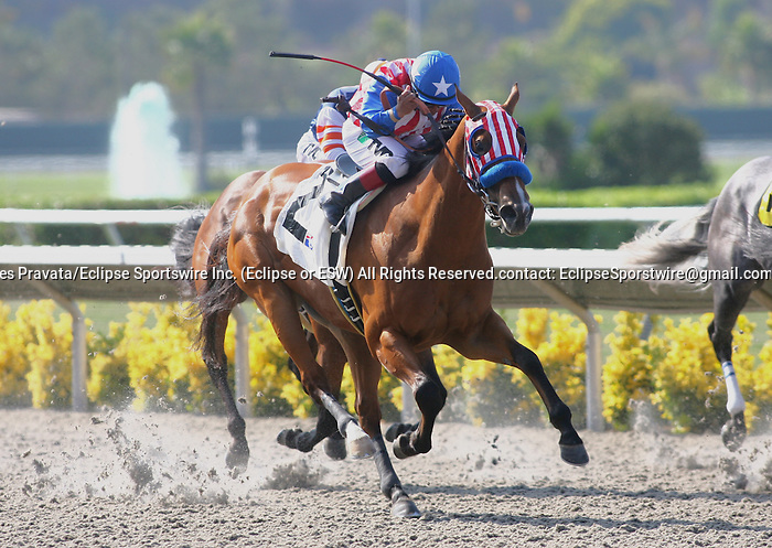 August 6th 2010: American Story by Ghostzapper breaks her maiden under  jockey Rafael Bejarano at Del Mar Race Track in Del Mar CA.