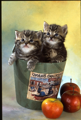 Interlitho, Alberto, ANIMALS, cats, photos, 2 cats in pot, apples(KL15547,#A#) Katzen, gatos