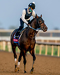 November 1, 2020: Echo Town, trained by trainer Steven M. Asmussen, exercises in preparation for the Breeders' Cup Sprint at Keeneland Racetrack in Lexington, Kentucky on November 1, 2020. Scott Serio/Eclipse Sportswire/Breeders Cup /CSM