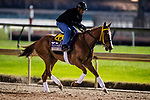 October 31, 2018 :Stormy Embrace, trained by Kathleen M. O'Connell, exercises in preparation for the Breeders' Cup Filly & Mare Sprint at Churchill Downs on October 31, 2018 in Louisville, Kentucky. Evers/ESW/Breeders Cup