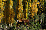 Horses in pasture in early fall.