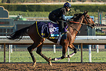 ARCADIA, CA  OCTOBER 30:  Breeders' Cup Juvenile Turf entrant Decorated Invader, trained by Christophe Clement, exercises in preparation for the Breeders' Cup World Championships at Santa Anita Park in Arcadia, California on October 30, 2019. (Photo by Casey Phillips/Eclipse Sportswire/CSM)