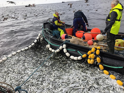 Formal liaison between the fishing industry and offshore renewable energy needed to be set up say the National Inshore Fishermen's Association