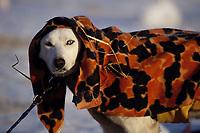 Close up of Jim Lanier's Dog -Dina- at Galena