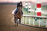 Bon Raison, trained by trainer Jack Sisterson, exercises in preparation for the Breeders' Cup Dirt Mile