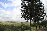 Israel, Sharon region, Ilan lookout at Rosh Haayin forest
