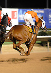 10 January 30: Triofield seems to be flying as he passes under the wire the first time in the 4th race prior to the 16th running of the grade 3 John B. Connally Turf Handicap for three year olds and upward at Sam Houston Race Park in Houston, Texas.