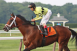 31 May 2010: Quality Road and jockey John Velazquez return after winning the Metropolitan Mile Handicap at Belmont Park in Elmont NY.