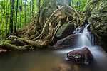 Waterfall, stream and tangled tree roots in lowland rainforest. Masoala National Park, Madagascar. (digitally stitched image)