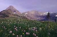 Mountains at sunset and wildflowers, Wild Chives,Allium schoenoprasum, Glacier National Park, Montana, USA