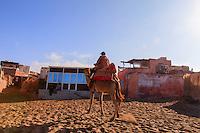 Africa, Marocco,Tifnit,a berber kamel rider cross the beachin morning