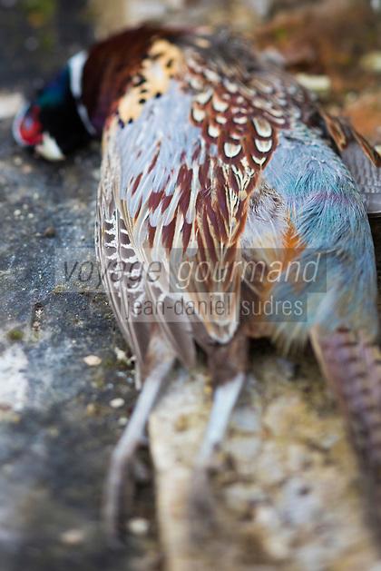 Europe/France/Centre/41/Loir-et-Cher/Sologne/Env de Bracieux:  Tableau de Chasse - Faisan  // Europe/France/Centre/41/Loir-et-Cher/Sologne/Near  Bracieux:  Hunting Season: Pheasant
