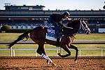 November 4, 2020: Fire At Will, trained by trainer Michael J. Maker, exercises in preparation for the Breeders' Cup Juvenile Turf at Keeneland Racetrack in Lexington, Kentucky on November 4, 2020. Gabriella Audi/Eclipse Sportswire/Breeder's Cup/CSM
