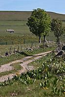 Europe/France/Midi-Pyrénées/12/Aveyron/Aubrac/Env de Laguiole: sous le Puech du Suquet
