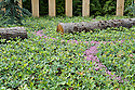 """""""Quilted Velvet Garden"""", RHS Hampton Court Flower Show 2009.  A ground cover of oak tree seedlings (Quercus robur), with winding trails of purple heather (Erica tetralix 'Pink Star')."""