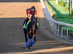 April 27, 2021: Medina Spirit, trained by trainer Bob Baffert, exercises in preparation for the Kentucky Derby at Churchill Downs on April 27, 2021 in Louisville, Kentucky. John Voorhees/Eclipse Sportswire/CSM
