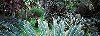 France/DOM/Martinique/Balata/Les jardins: La palmeraie