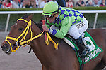 Wildcat Red and jockey Javier Castellano cruise to victory in the Hucheson Stakes(G3) for 3 year olds. Gulfstream Park, Hallandale Beach Florida. 02-01-2014