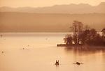 Seattle, Rowing coach coaching eight oared racing shell during workout at sunrise, Lake Washington, Washington State, Pacific Northwest, United States,