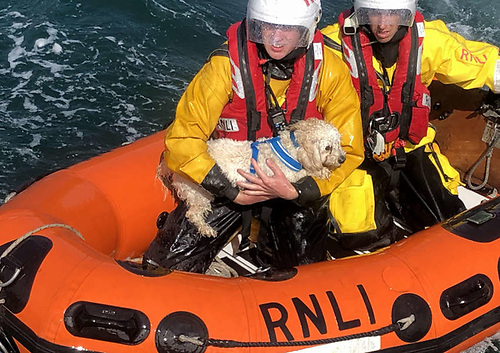 Ellie the dog in the arms of a Dunmore East lifeboat volunteer