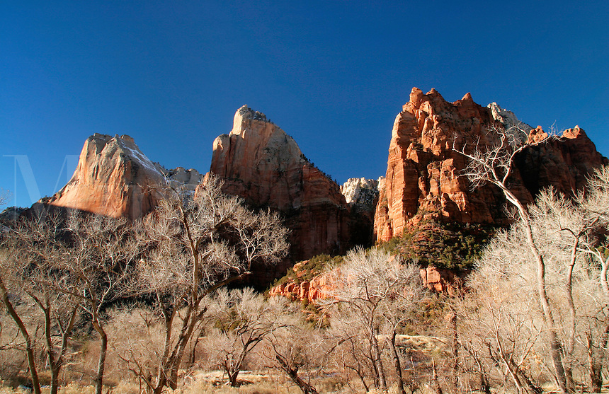 Cliffs of the Three Patriarchs above cottonwood trees, Zion National Park, Washington County, U