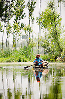 Kashmiri woman paddling traditional shikara down tree-lined backwater channel, Dal Lake, Srinagar, Kashmir, India.