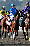 6 November 2009: Julien Leparoux on She Be Wild in the post parade before the G1 Breeder's Cup Juvenile Fillies at Santa Anita in Arcadia California.