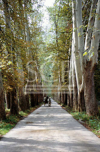 Sarajevo, Bosnia. Horse and carriage driving through an avenue of trees in Iliga Park.