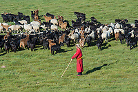 Mongolia, Ovorkhangai Province, Kharakhorum. Man herding sheep and goats.
