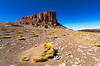 Salar de Tara rocks and yellow coiron grass perspective under a blue sky, in the Atacama Desert at the border between Chile, Argentina, and Bolivia