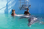 Lily Pearce With Rough-toothed Dolphins