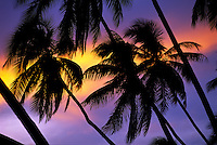 A group of palm trees are silhouetted at sunset against a purple and yellow streaked sky.