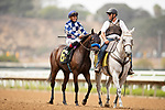AUGUST 28, 2021:  Captaire, a half sister to California Chrome, with Abel Cedillo  in the post parade before a maiden race at Del Mar Fairgrounds in Del Mar, California on August 28, 2021. Evers/Eclipse Sportswire/CSM